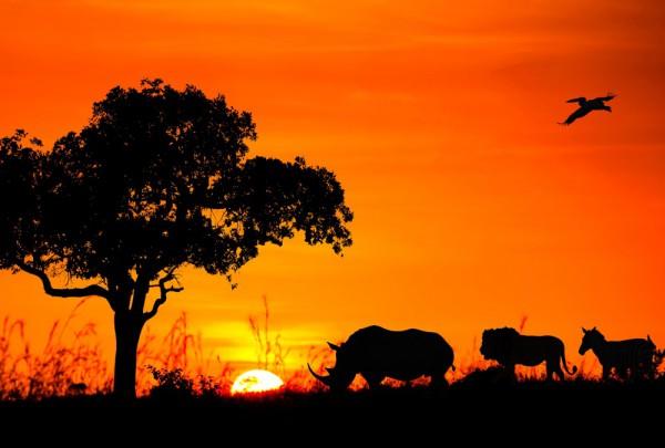 Fototapete Nr. 3376 - African animal caravan
