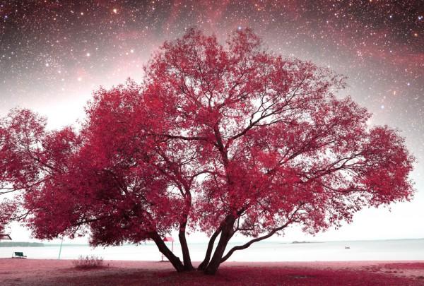 Fototapete Nr. 3144 - Frühlingsnacht infrarot