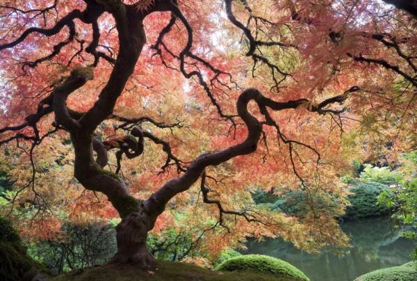 Fototapete Nr. 4541 - Japanischer Garten