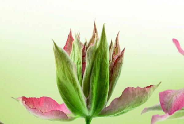 Fototapete Nr. 3305 - Wilde Orchideen
