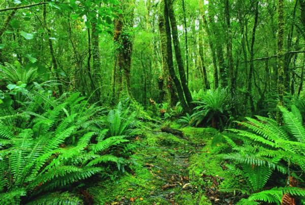 Fototapete Nr. 3190 - Tropischer Regenwald, Elfenbeinküste