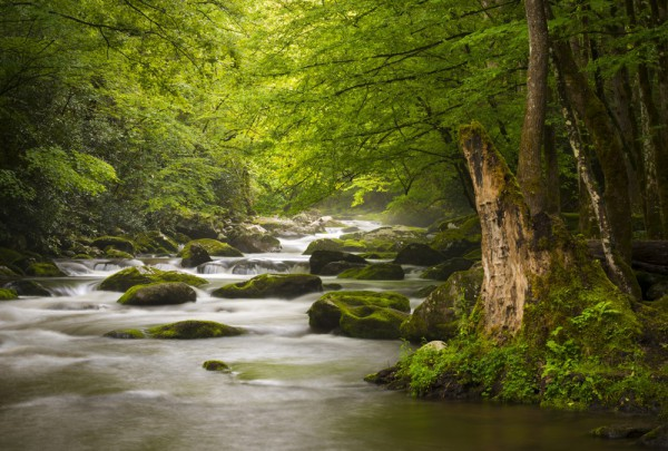 Fototapete Nr. 3596 - Smoky Mountains National Park