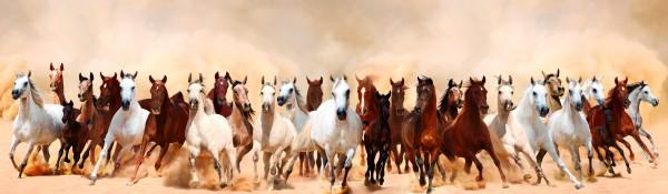 Panoramatapete Nr. 3336 - Eine Herde wilder Pferde
