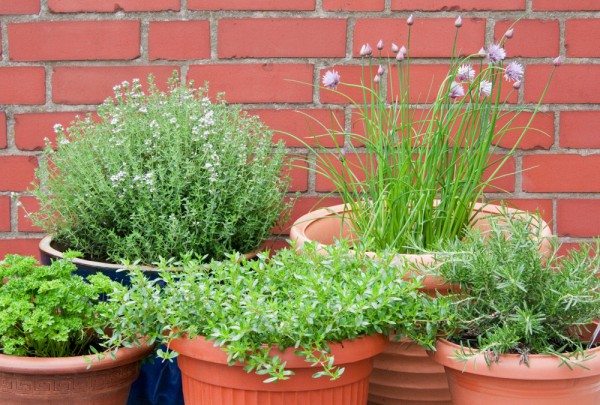 Fototapete Nr. 3613 - Culinary herbs