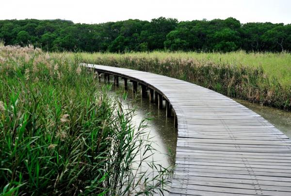 Fototapete Nr. 3175 - Holzweg im Hong Kong Wetland Park
