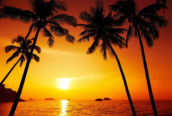 Fototapete Nr. 3431 - Sonnenuntergang unter Palmen