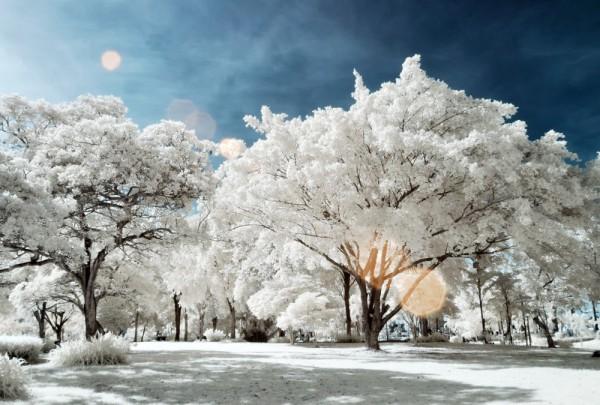 Fototapete Nr. 3145 - Park infrarot