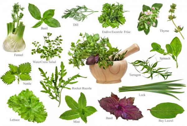 Fototapete Nr. 3612 - Fine herbs