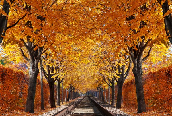 Fototapete Nr. 3866 - Railroad Autumn
