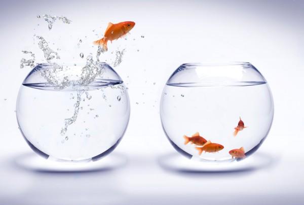 Fototapete Nr. 4530 - Goldfish in Love