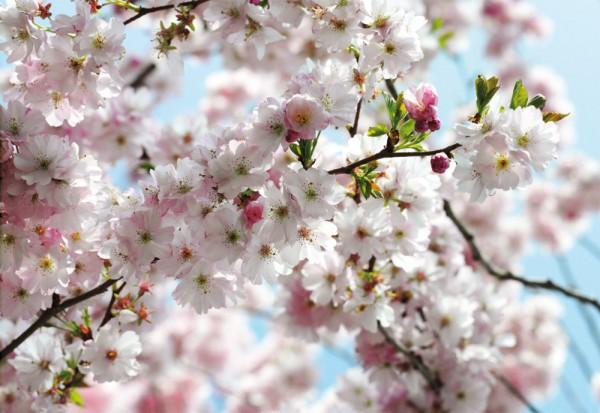 Fototapete Nr. 9650 - Spring
