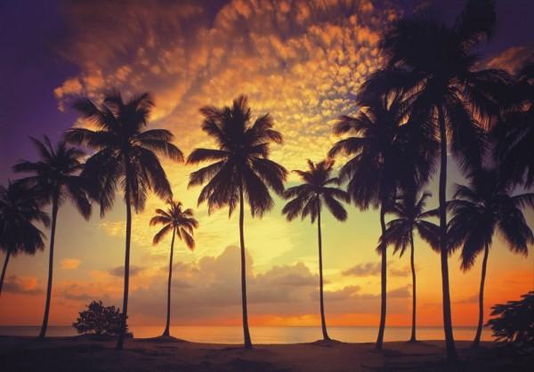 Fototapete Nr. 8770 - Tropical Sunset