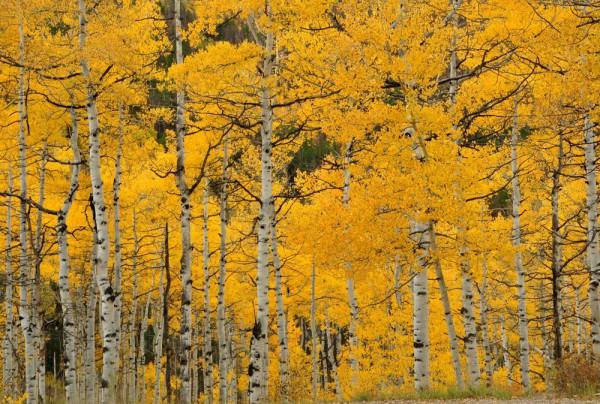 Fototapete Nr. 3865 - Colorado Indian Summer