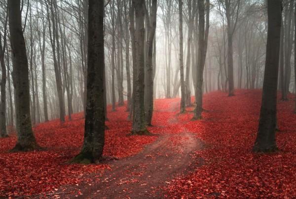 Fototapete Nr. 3600 - Herbstweg