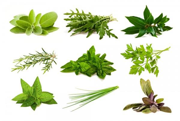 Fototapete Nr. 3614 - Aromatic herbs