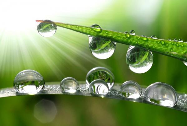 Fototapete Nr. 3448 - Grass Drops