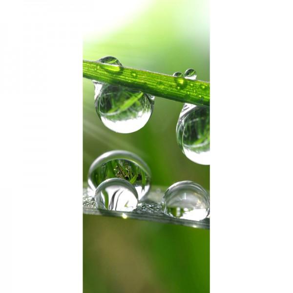 Türtapete Nr. 3448 - Grass Drops